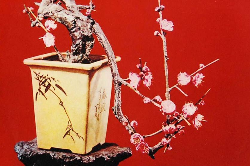 【晓荷·心愿】春之序曲(征文·组诗)