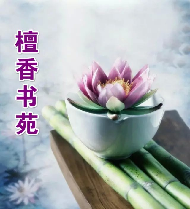 【檀香】母亲捡起的落叶(诗歌)